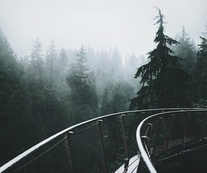 landscape, adventure, and forest image