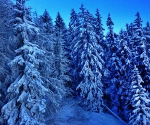 blue, snow, and tree image