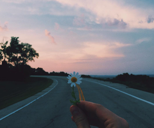 flowers, sky, and road image
