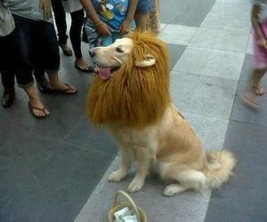 lion, dog, and animal image