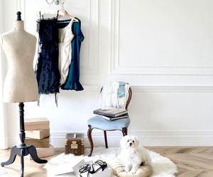 beautiful, dog, and fashion image