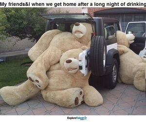funny, bears, and car image
