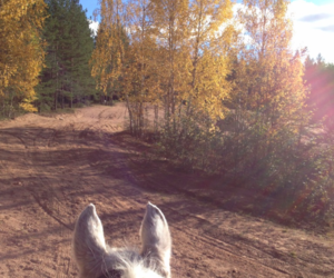 cozy, fall, and horse image