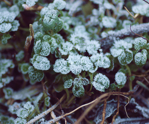 clover, cold, and frost image