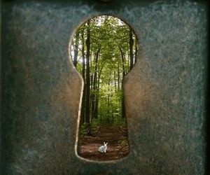 alice in wonderland, forest, and key hole image
