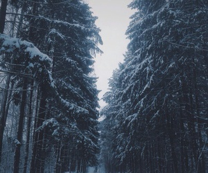 forest, frozen, and snow image