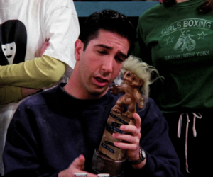 David Schwimmer, fun, and funny image