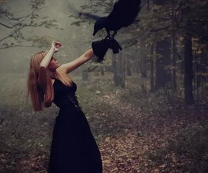 forest, black, and crow image