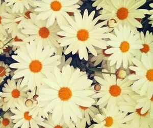 flowers, wallpaper, and flores image