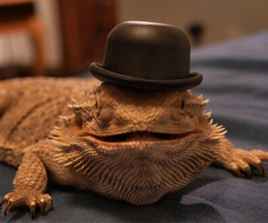 funny and bearded dragon image