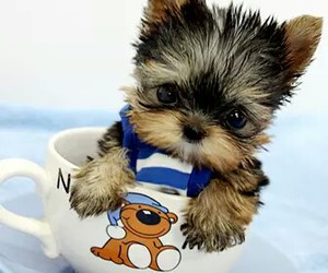 animals, teacup, and dog image