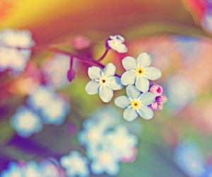 flowers, spring, and photography image