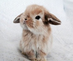 cute, bunny, and animal image