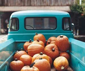autumn, beauty, and truck image