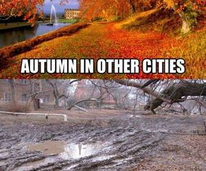 autumn, city, and funny image