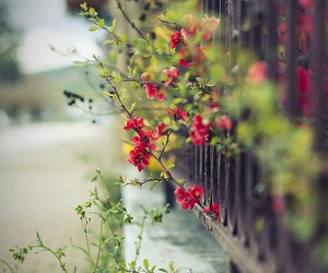 flowers and red image