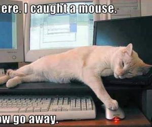 cat, funny, and mouse image