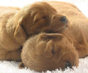 puppy, baby animals, and cute animals image