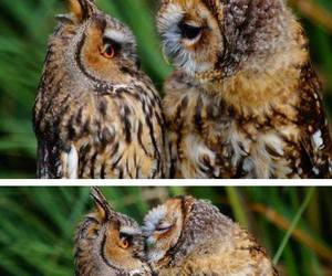 owl, kiss, and animal image