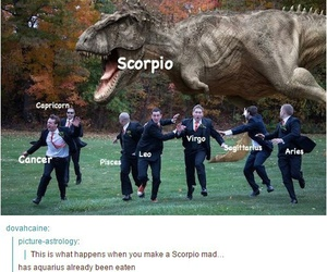 scorpio, funny photos, and typical me image