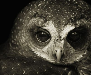 eyes, owl, and cute image
