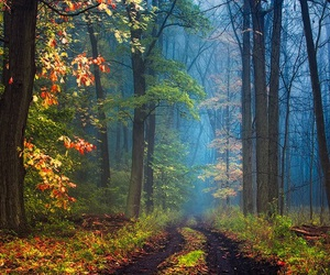 autumnal and forests image