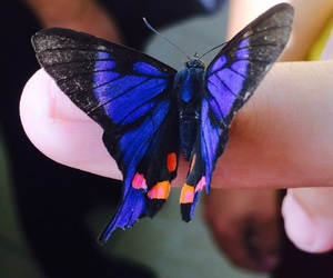 beautiful, butterfly, and cute image