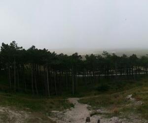 autumn, beach, and fog image