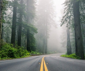 road and forest image