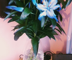 blue, pretty, and lilly's image