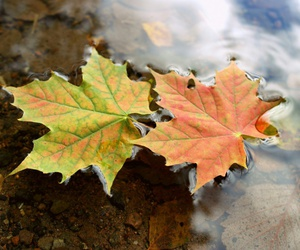 water, autumn, and leaves image