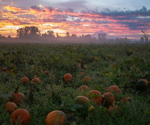 Halloween, morning, and nature image