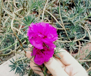 flor, hand, and nature image