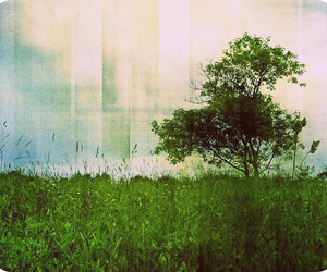 field, tree, and grass image