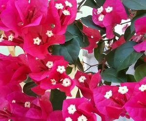flower, fotografia, and inspiracao image