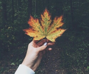 autumn, leaves, and hand image