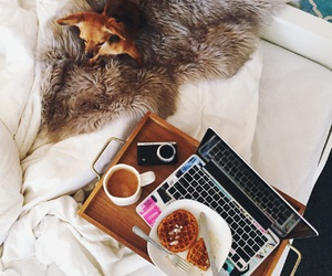 animal, bed, and breakfast image