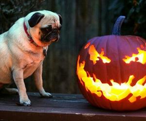 Halloween and dog image