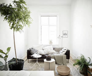 decorating, decoration, and green image