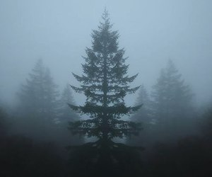 tree, forest, and fog image