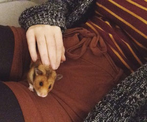 fashion, hamster, and my image