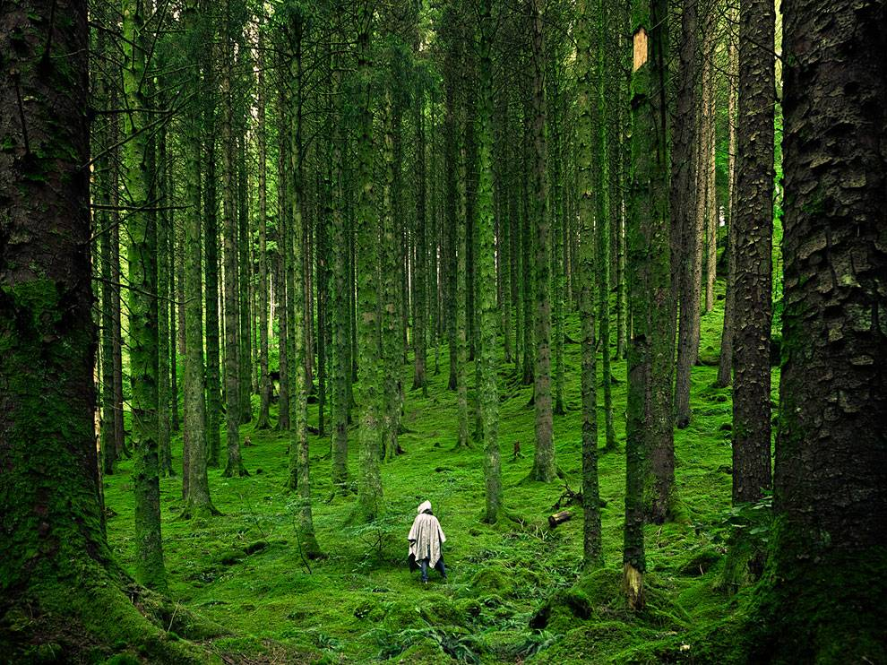 Forest Picture Scotland Wallpaper National Geographic