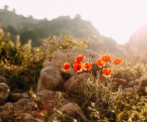 flower, italy, and matera image