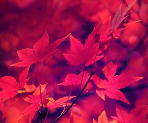 red and leaves on trees image