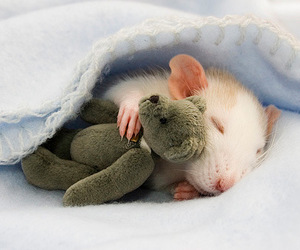 mouse, teddy, and sleeping image