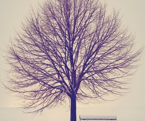 tree, winter, and snow image