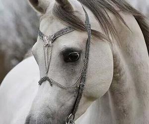 horse, white, and animal image