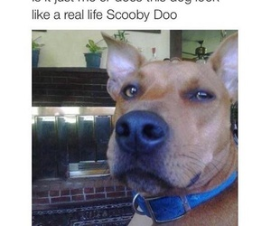 dog, funny, and scooby doo image