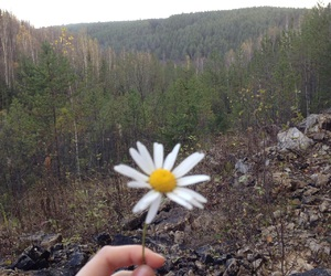 flower, forest, and rocks image