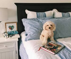 bed, dog, and bedroom image